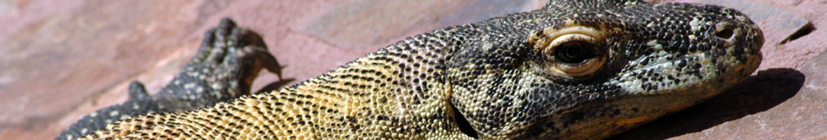 Komodo Dragons in Palmitos Park, visit the reptiles