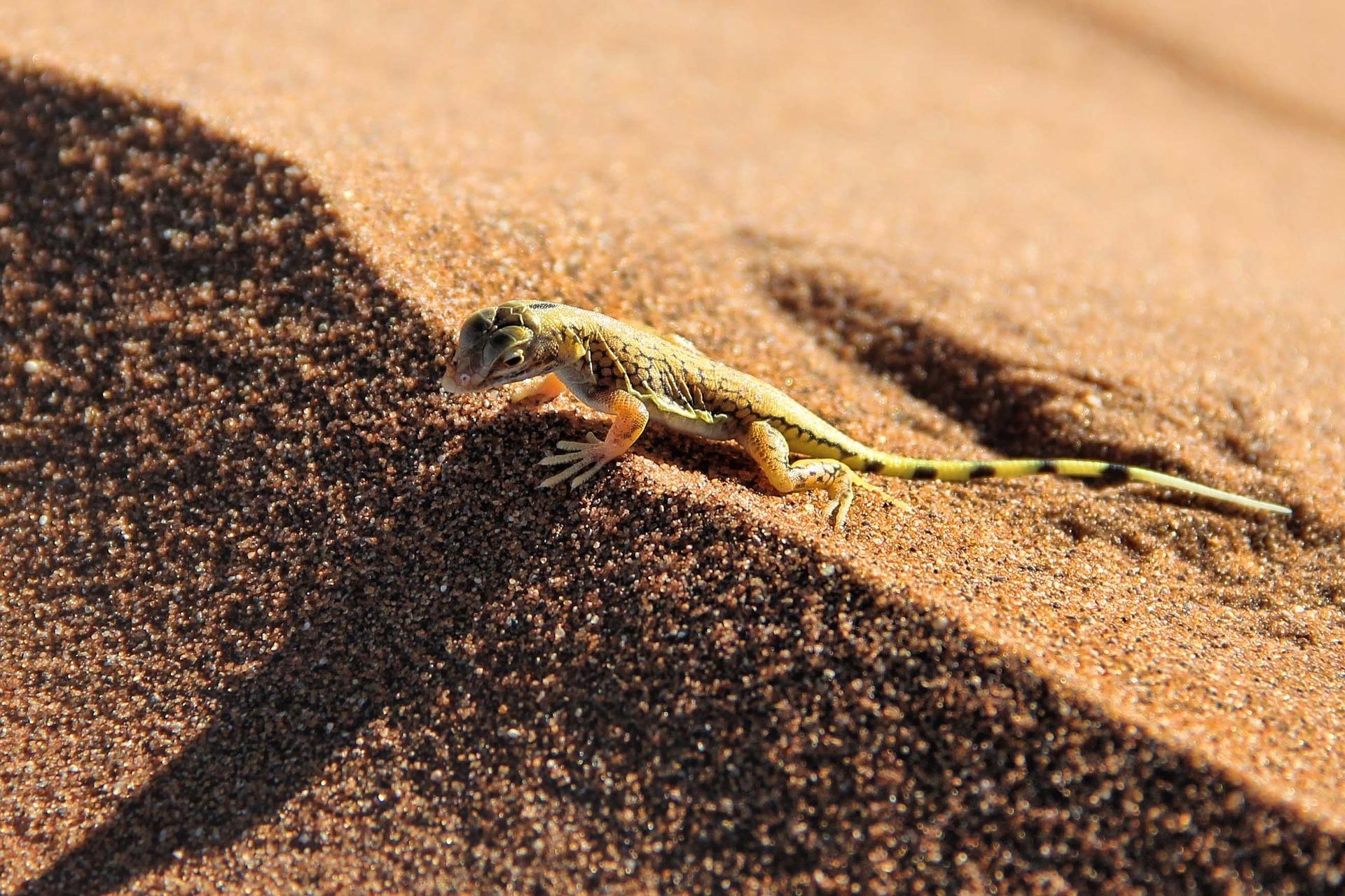 Animales del desierto, una historia de supervivencia