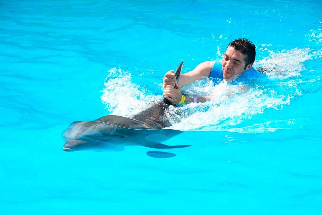 Nada con delfines en Canarias, Palmitos Park