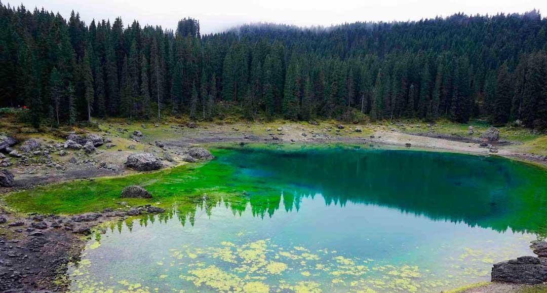 La conservación de la biodiversidad es fundamental para un mundo sostenible