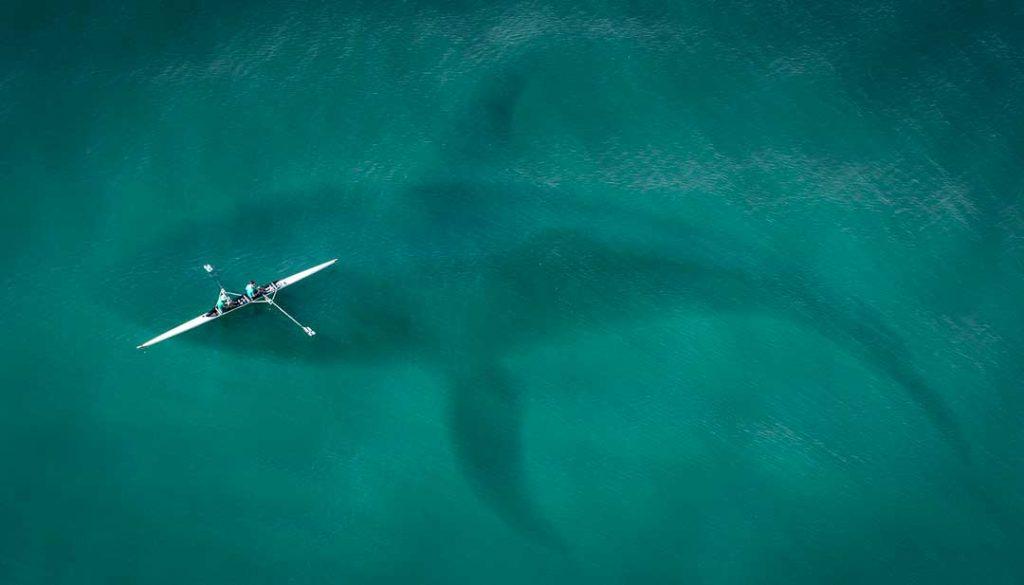 El cachalote, uno de los animales marinos más grandes del mundo.