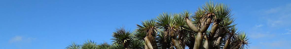 Plantas autóctonas de Gran Canaria