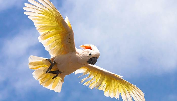 Exotic Birds
