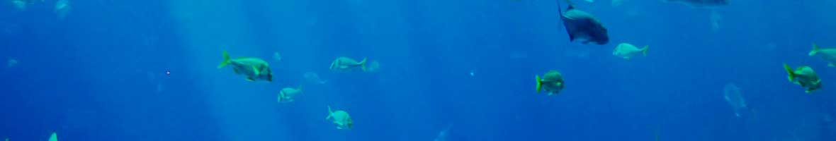 Tiburones en las Palmas de Gran Canaria
